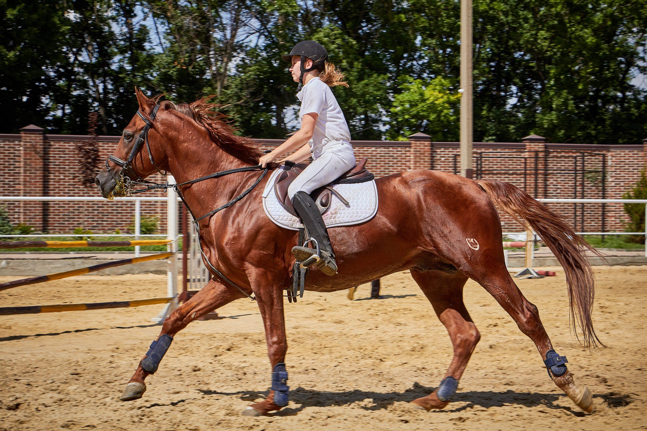 hestedaekken